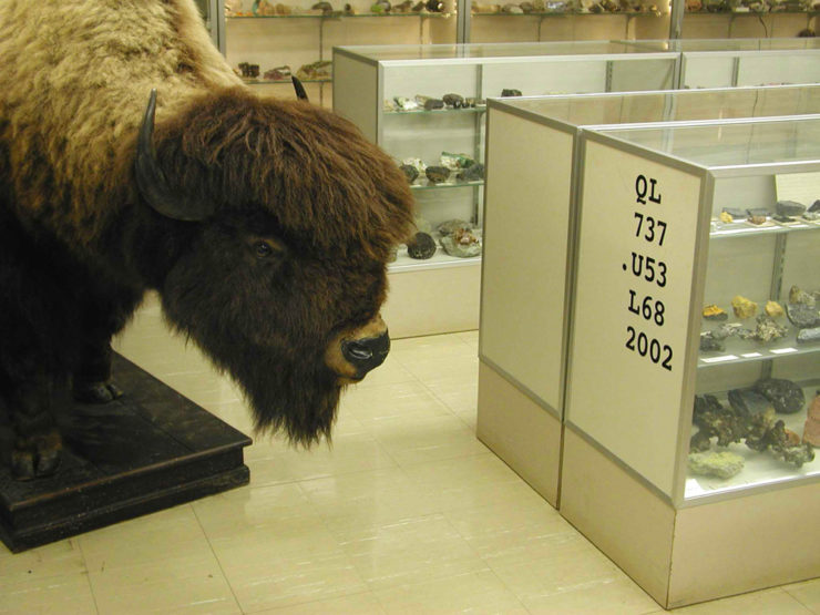 American Bison: A Natural History Lott, Dale F.